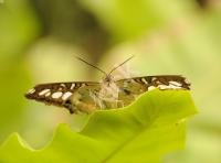 butterfly_5088 copy