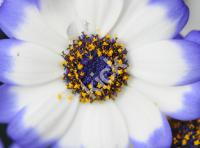 flower_0533 copy