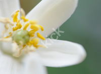 flower_0550 copy