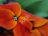 flowers_0548 copy