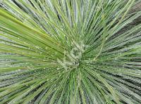 plant_0457_2 copy