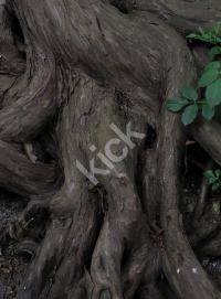 tree_1491 copy
