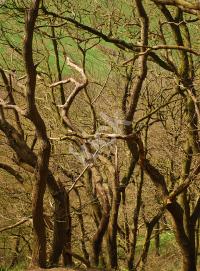trees_0108 copy